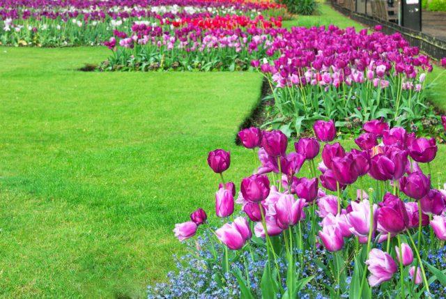 Les 4 étapes pour entretenir votre jardin ce printemps